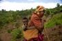 Terracing project in Rwanda